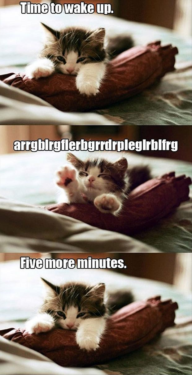 small kitten waking up in the morning, funny pictures