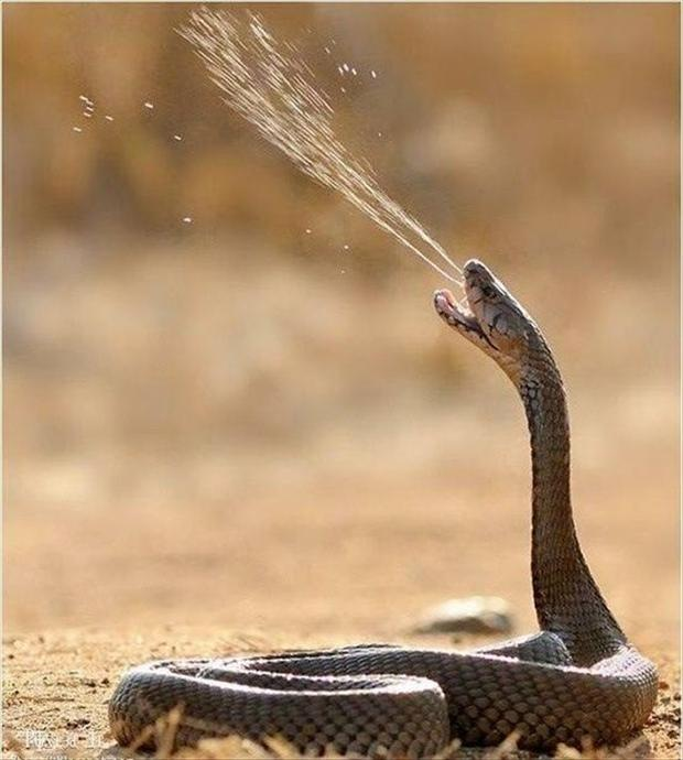 snake, perfectly timed photos