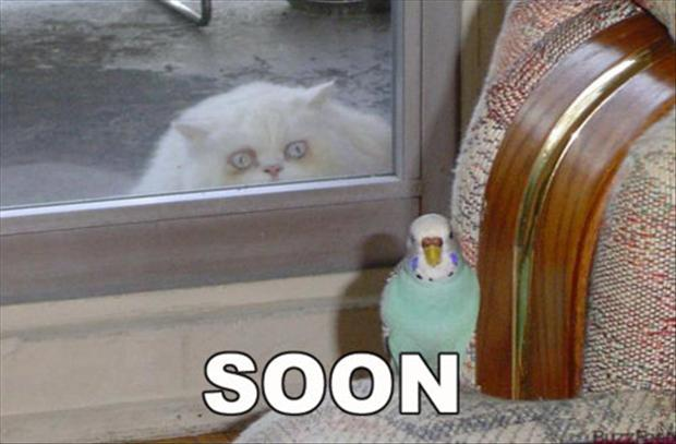 soon, bird and cat