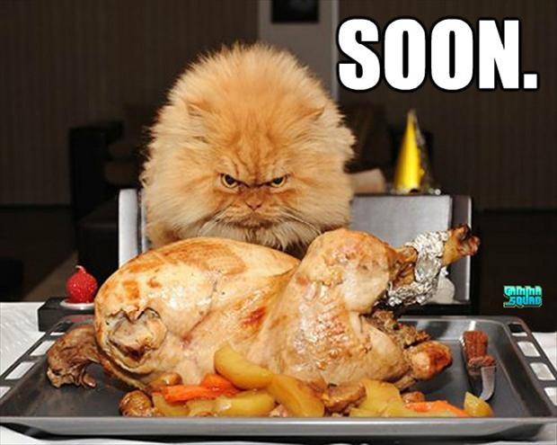 soon, cat eats turkey