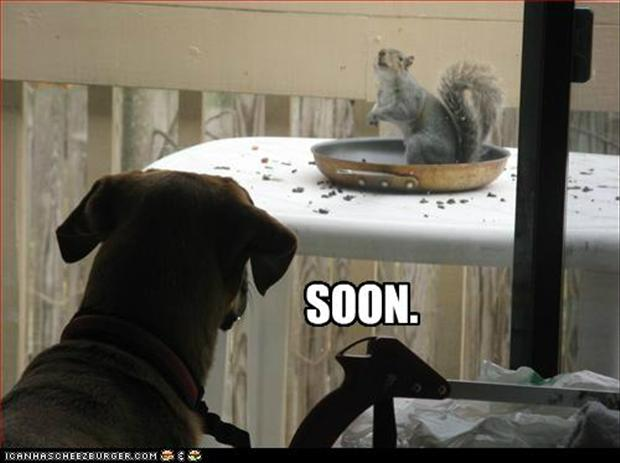 soon, dog and squirrel