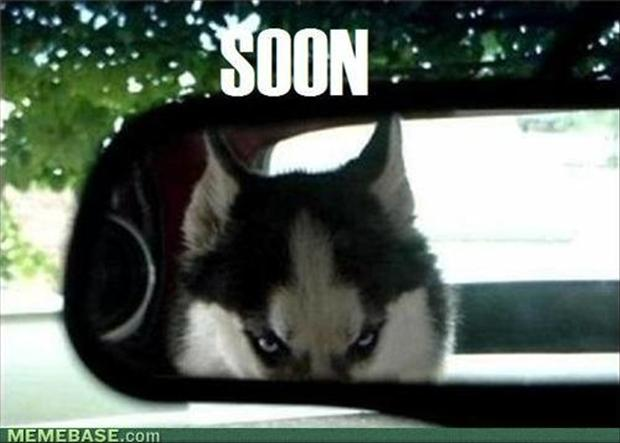 soon, dog in the back seat