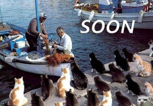 soon, fishing and cats