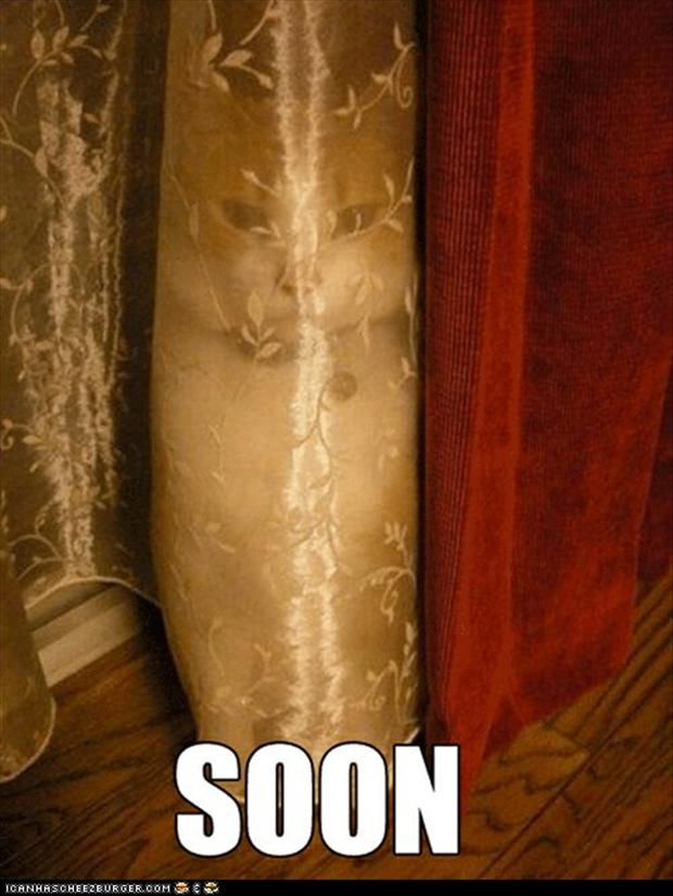 soon, hiding behind the curtains