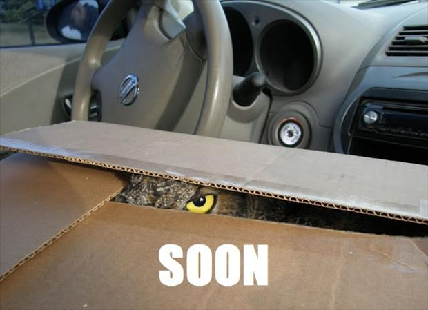 soon, owl in a box