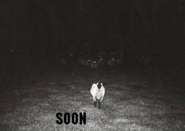 soon, sheep in a field