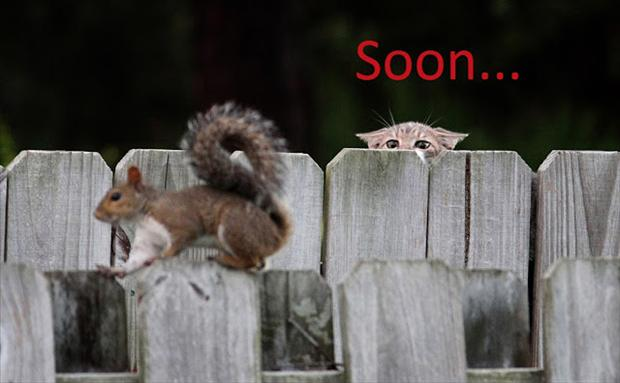 soon, squirrel and cat
