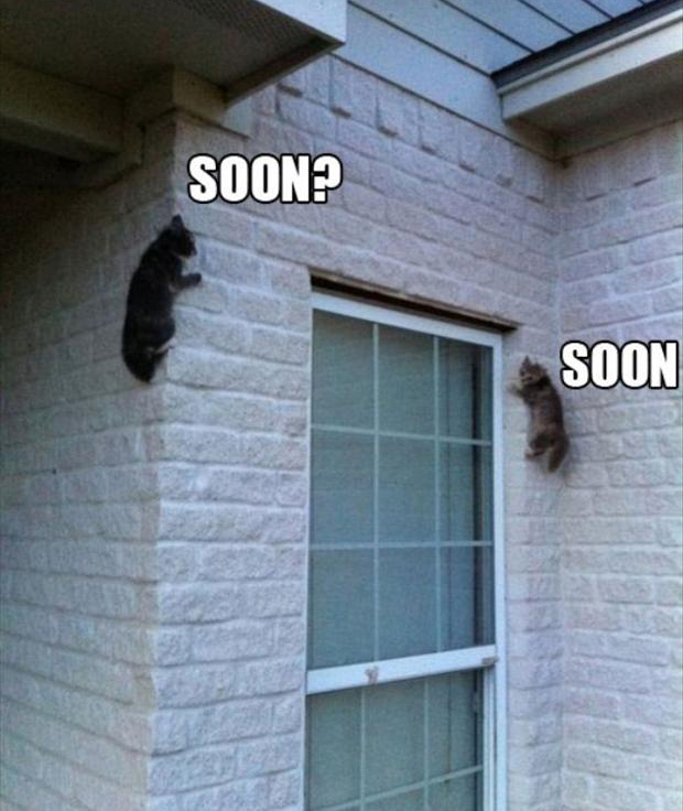 soon, two cats climb your house