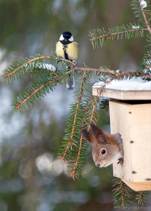 squirrel in bird house, funny animals