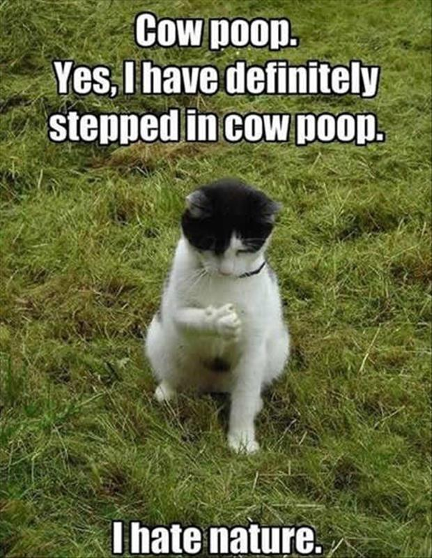 stepping in poop, funny cat pictures