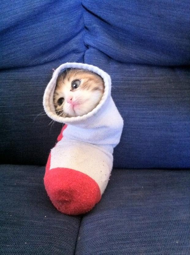 straight jacket for cats, sock