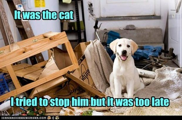 the cat did it, funny dogs