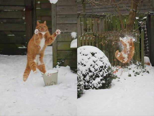 throw a snowball at your cat