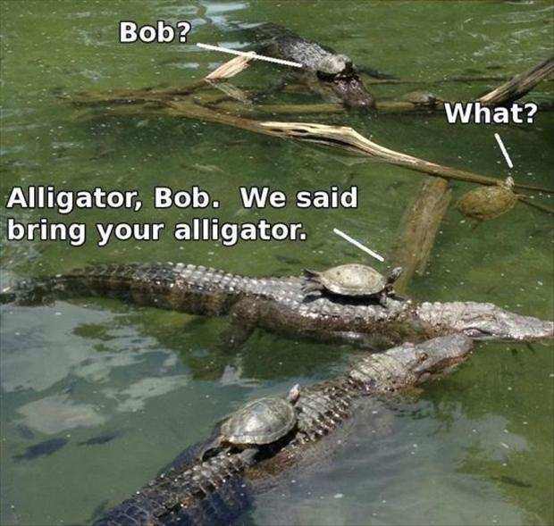 turtles and aligators, funny pictures