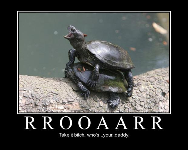 turtles, whos your daddy