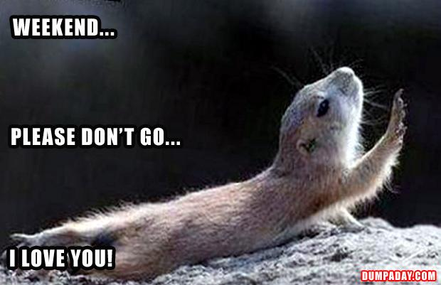 weekend, please don't go, i love you, funny animals pictures