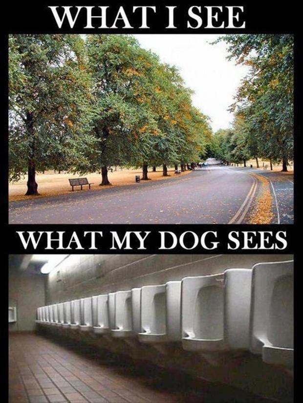 what i see, what my dog sees