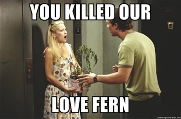 you killed our love fern, funny pictures