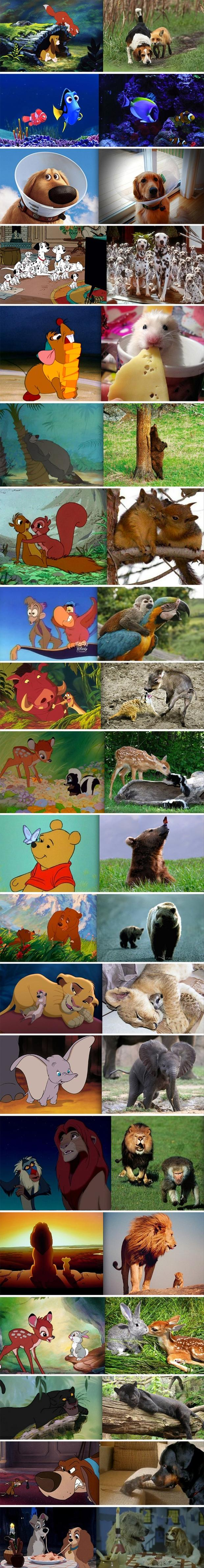 z cartoons look like real life animals