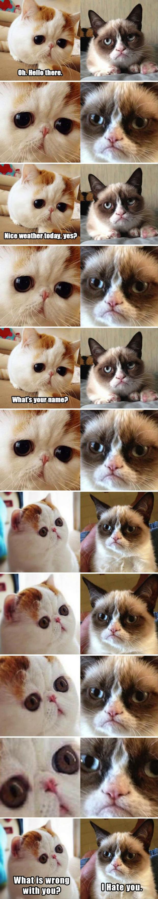 z grumpy cat, funny pictures