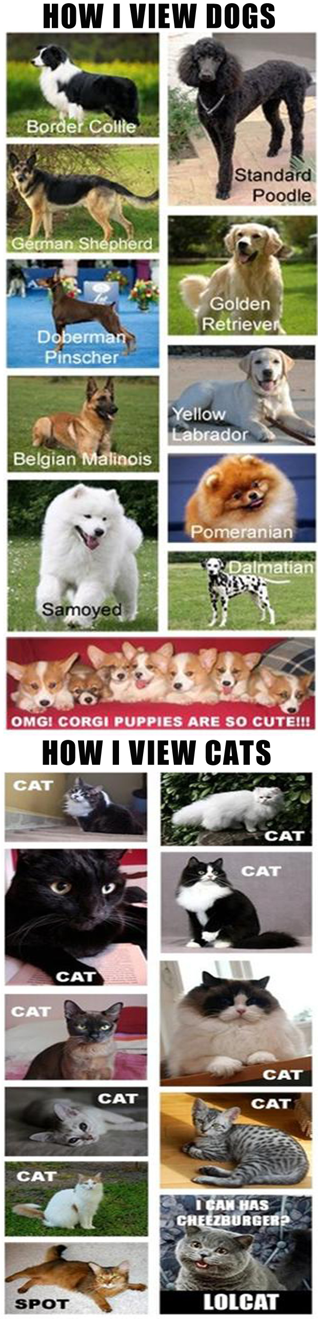 z how i view dogs, how i view cats