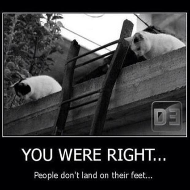 4 funny cats land on their feet