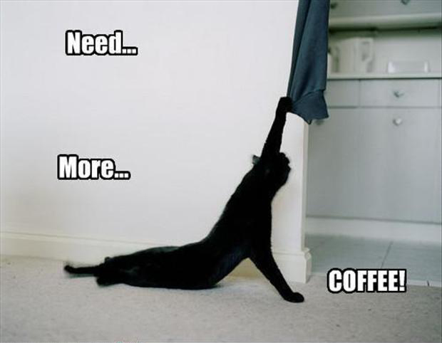 Funny Cat needs more coffee