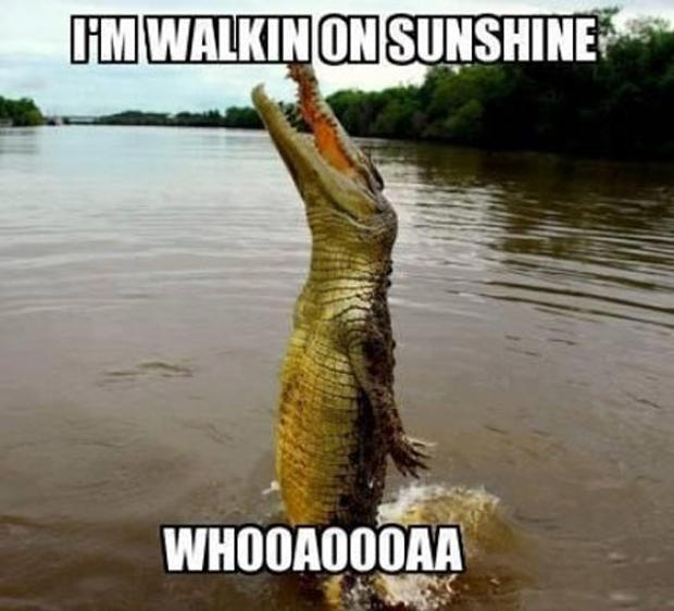 I'm walking on sunshine, whoa oh, funny pictures