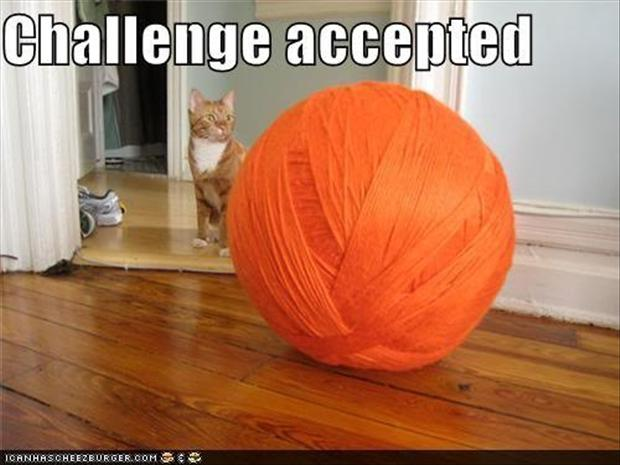 a challenge accepted, cat with giant ball of yarn