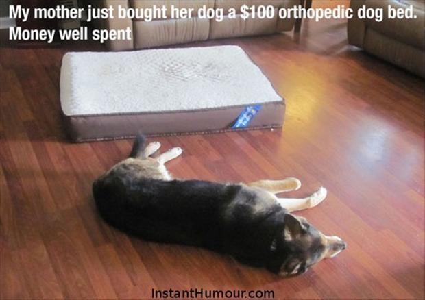 a funny dog bed