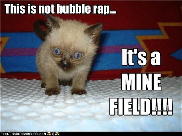 a funny kitten on bubble wrap