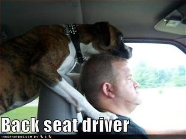 a funny pictures, back steat driver