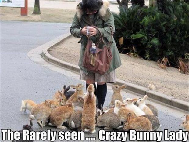 a funny pictures, bunny rabbits