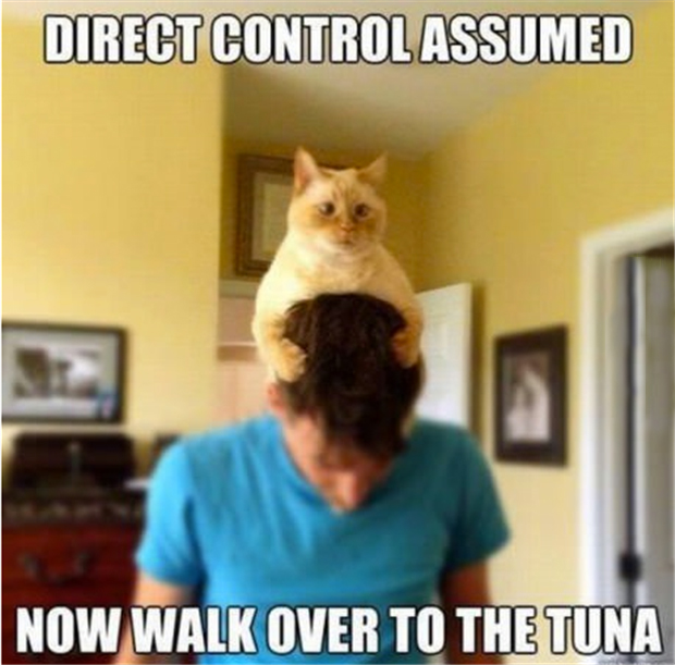a funny pictures, cat takes control over human