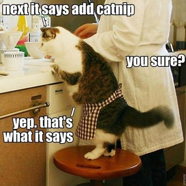a funny pictures, cooking with your cat
