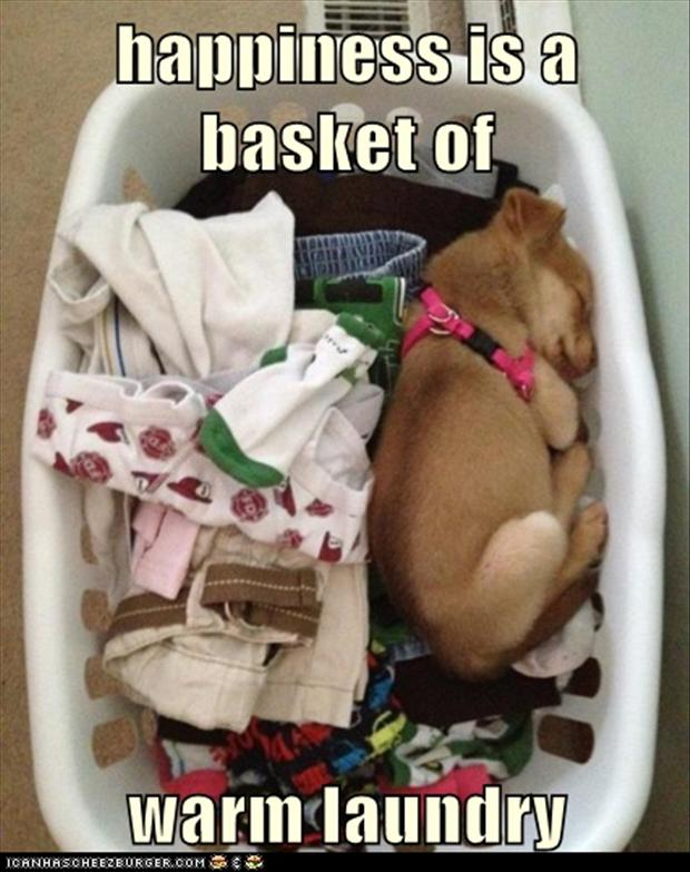 a funny pictures, dog sleeping on the laundry