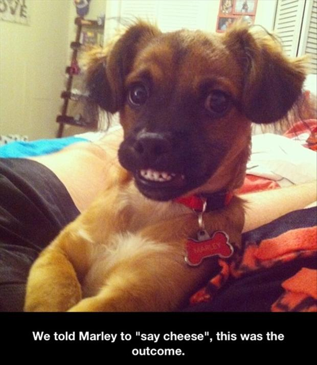 a funny pictures, dogs