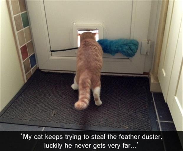 a funny pictures, feather duster and the cat