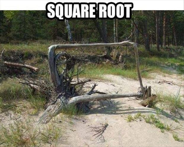 a funny pictures, square root