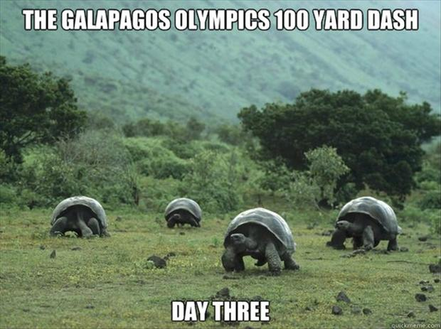 a funny pictures, turtles