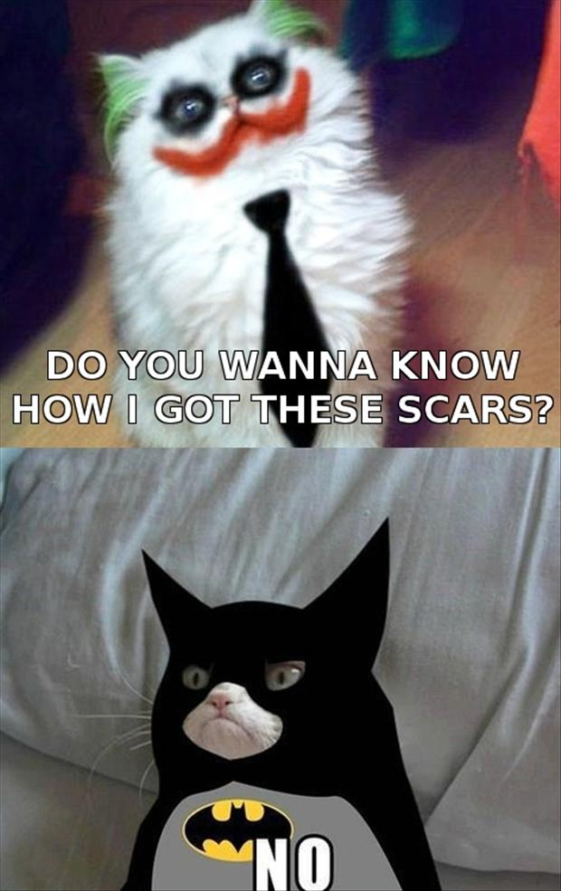 a grumpy cat is batman