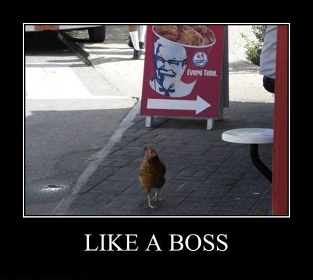 a like a boss, chicken