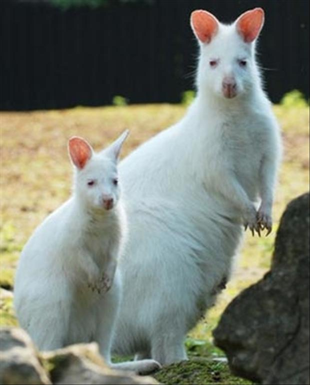 albino mother and child