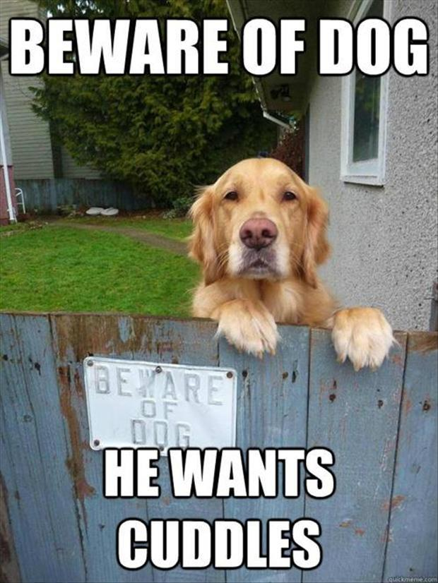 beware of dogs funny pictures