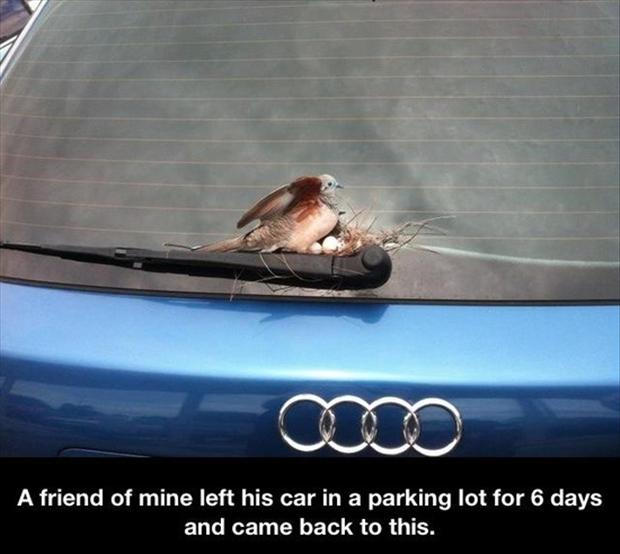 bird making a nest, funny pictures