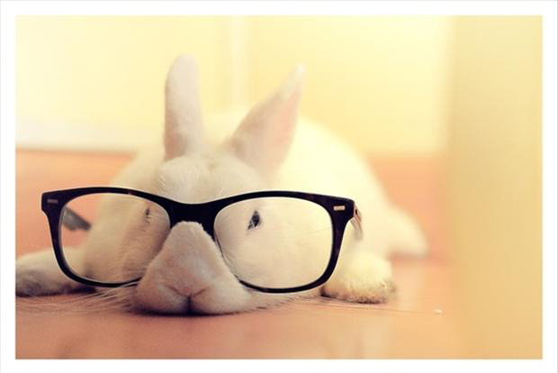 bunny rabbit with glasses