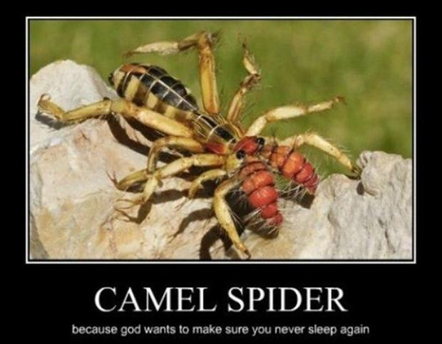 camel spider, demotivational posters
