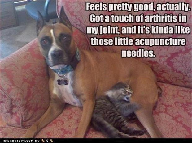 cat biting dog, funny pictures
