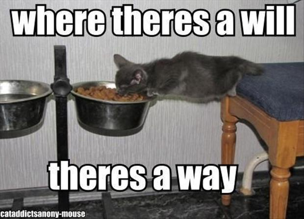 cat eating food, funny pictures
