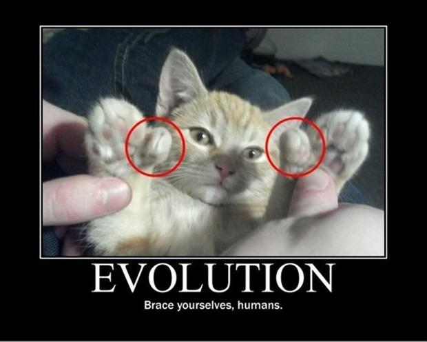 cat has thumbs demotivational posters